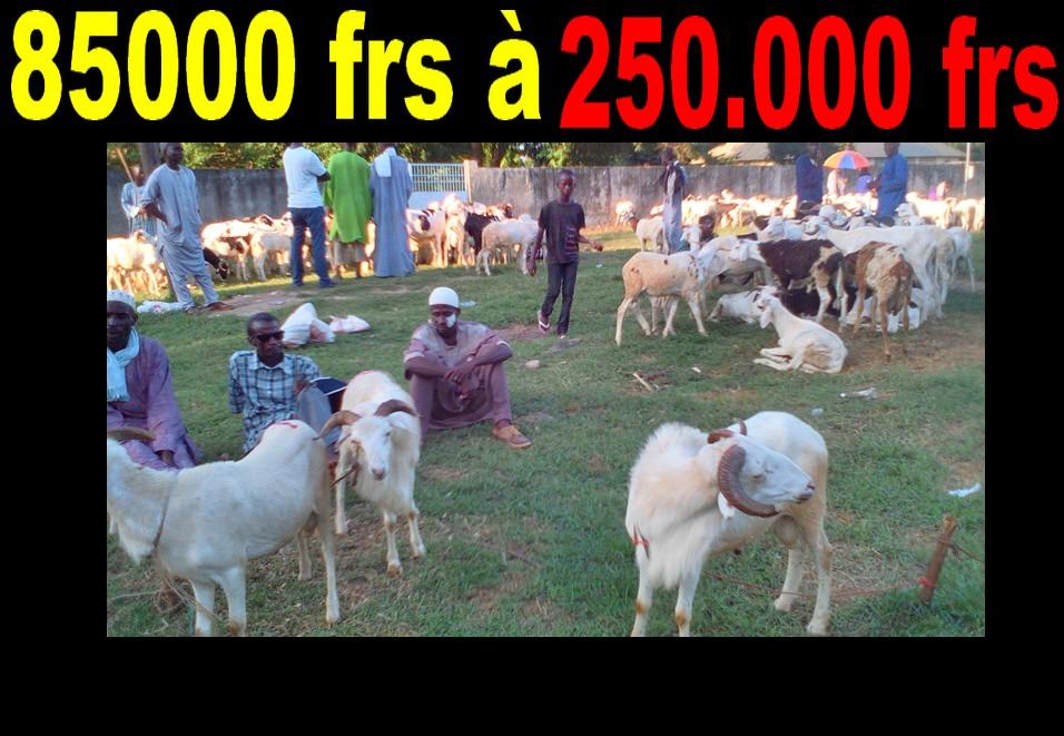 insuffisance-de-moutons-les-prix-grimpent