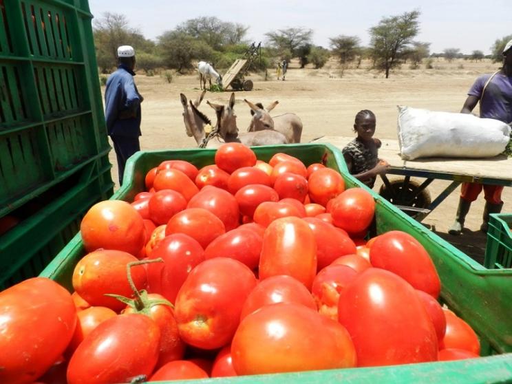 Produits horticoles - Tomates